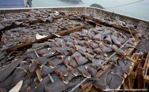 Aletas de Tiburón